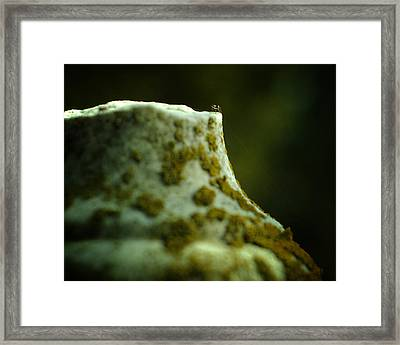 Leap Of Faith Framed Print by Rebecca Sherman