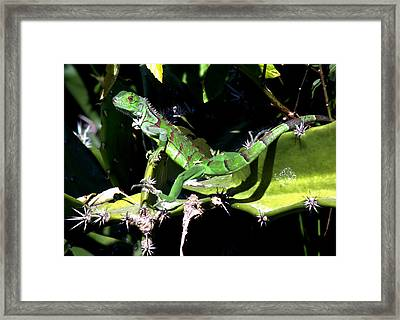 Leapin Lizards Framed Print by Karen Wiles