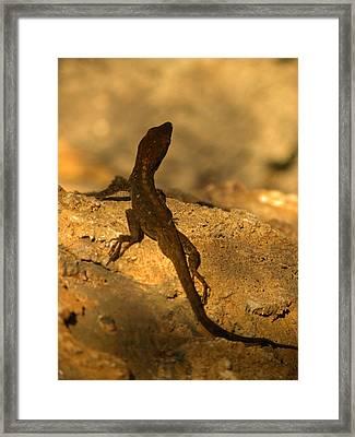 Leapin' Lizards Framed Print