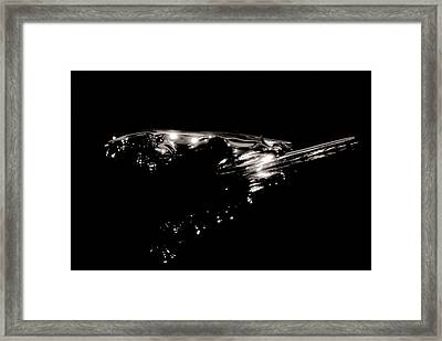 Framed Print featuring the photograph Leaping Cat by Bob Wall