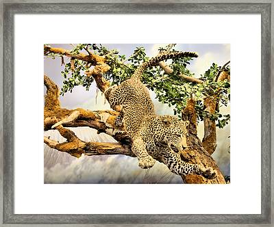 Leaping Leopard Framed Print by Kristin Elmquist