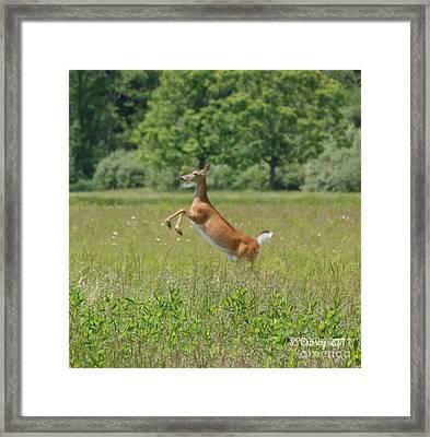 Leaping White-tail Deer Framed Print
