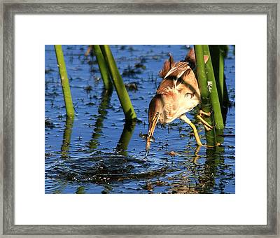 Least Bittern With A Molly Framed Print