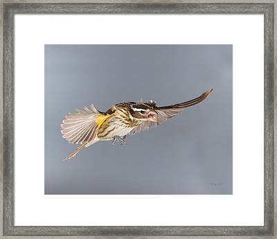 Framed Print featuring the photograph Leave Him Alone by Gerry Sibell
