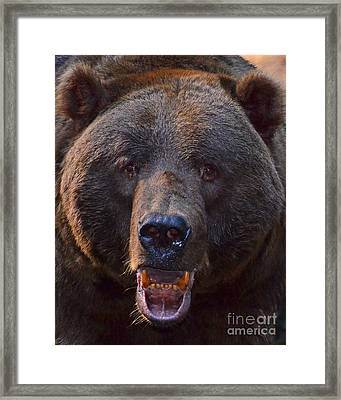 Framed Print featuring the photograph Leave Me Alone by Jack Moskovita