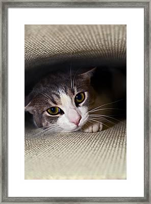Leave Me Alone Framed Print by Susan Leggett