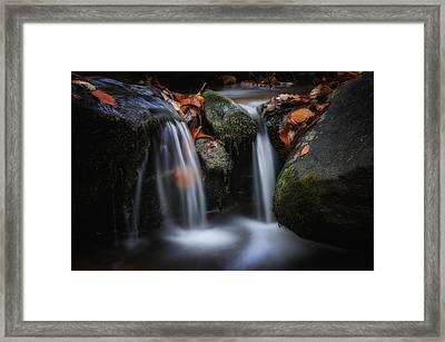 Leaves Along Small Stream 1 Framed Print