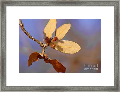 Leaves And Berries Framed Print by Jeremy Linot
