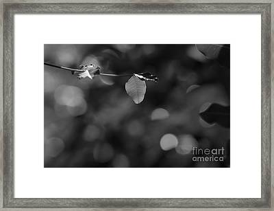 Leaves And Light Framed Print by Dariusz Gudowicz