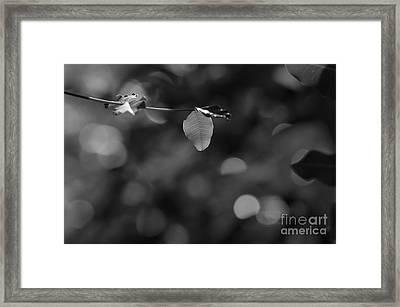 Leaves And Light Framed Print