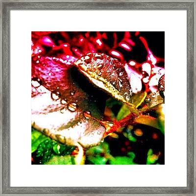 Leaves Edit Framed Print