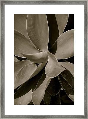 Leaves II - Mono Framed Print by Dickon Thompson