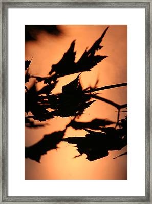 Leaves In Sunset Framed Print by Carolyn Reinhart