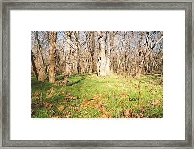 Leaves In The Fall Framed Print