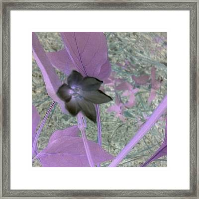 Leaves Of Lilac Framed Print