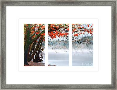 Leaves Of Red Framed Print by Darren Fisher