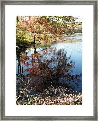 Leaves Of Reflections Framed Print by Kim Galluzzo Wozniak