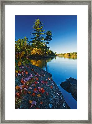 Leaves On Rock, Killarney Provincial Framed Print by Mike Grandmailson