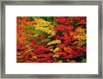 Leaves On Trees Changing Colour Framed Print by Mike Grandmailson