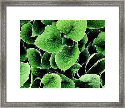 Framed Print featuring the photograph Leaves by Ranjini Kandasamy