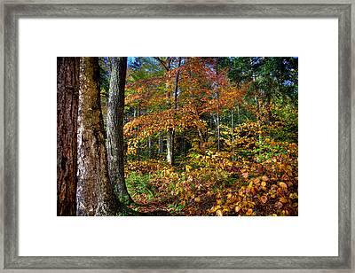 Leaving Cary Lake Framed Print