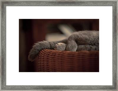 Legs And Tail Of A Sleeping Cat Framed Print by Light Thru My Lens Photography