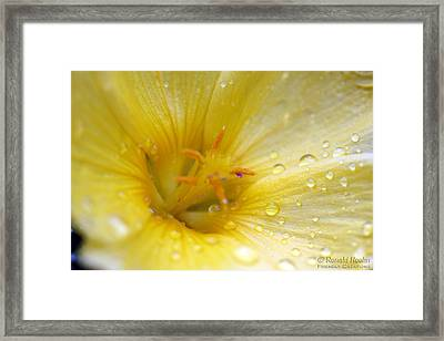 Lemon Dew Framed Print