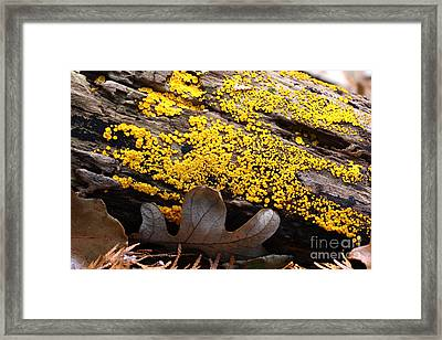Lemon Drops Framed Print