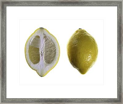 Lemon Framed Print by Nathaniel Kolby