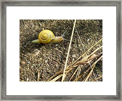 Lemon Snail Framed Print