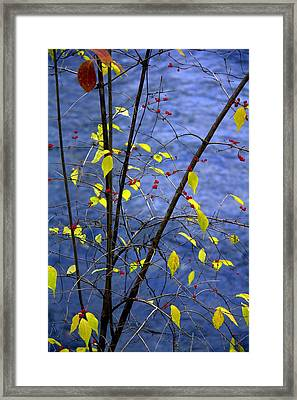 Lemonettes Framed Print