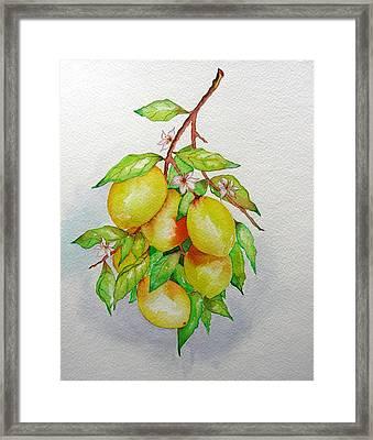 Lemons Framed Print by Elena Mahoney