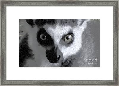 Lemur Framed Print by John From CNY