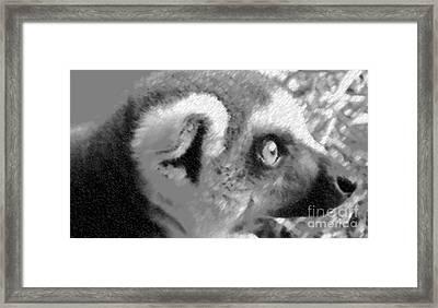 Lemur Ll Framed Print by John From CNY
