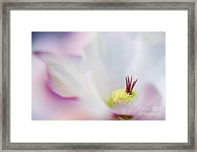 Lenten Folds Framed Print by Jacky Parker