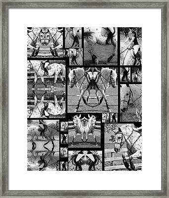 Leopard Appaloosa Collage Framed Print by Betsy Knapp