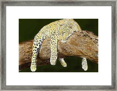 Leopard At Rest Framed Print by Yvonne Scott