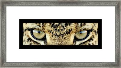Leopard Eyes Framed Print by Sumit Mehndiratta