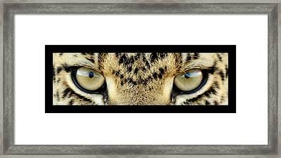 Leopard Eyes Framed Print by Sumit Mehndiratta