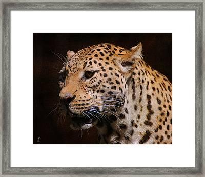 Leopard IIi Framed Print by Jai Johnson