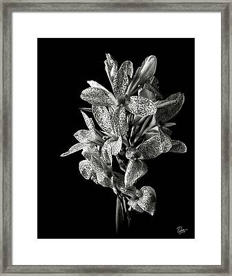 Leopard Lily In Black And White Framed Print