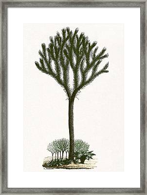 Lepidodendron, Artwork Framed Print by Sheila Terry