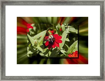 Let It Bee Framed Print by Charles Warren