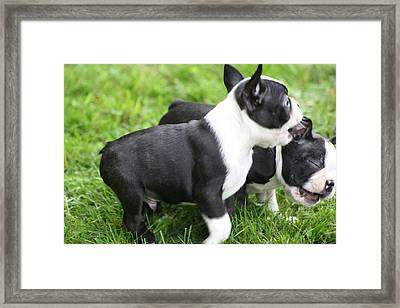Let Me Chew On Your Ear Framed Print
