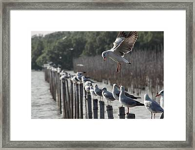 Let Me Feed You Framed Print by Nabil Kannan