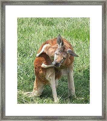 Let Me Grab My Wallet Framed Print by Heather Jett