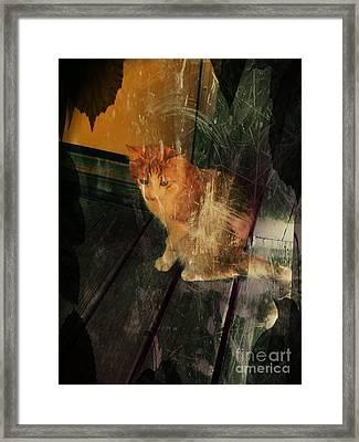 Let Me In Framed Print by Denisse Del Mar Guevara