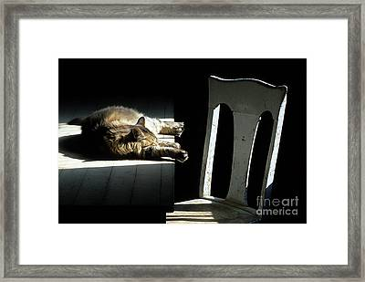 Let Sleeping Cats Lie Framed Print by Bob Christopher