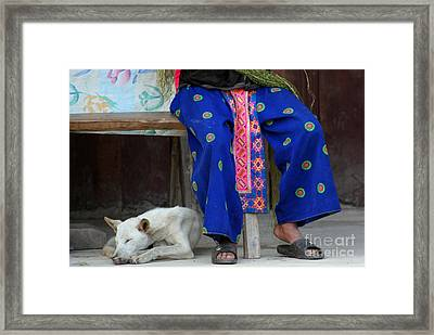 Framed Print featuring the photograph Let Sleeping Dogs Dream by Nola Lee Kelsey
