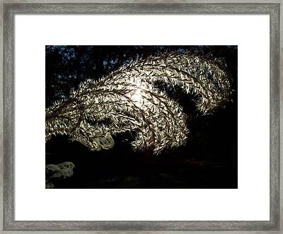 Framed Print featuring the photograph Let The Light Shine Through by Chad and Stacey Hall